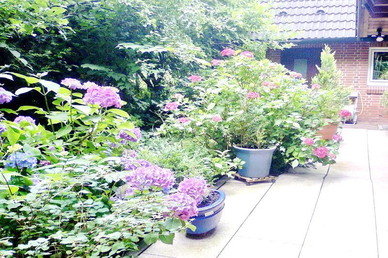Garten/Eingangsbereich